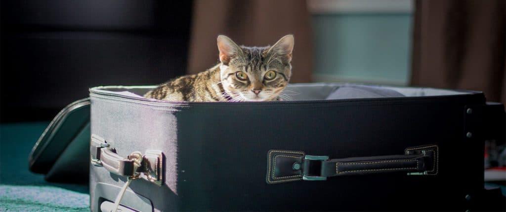 portare un gatto in inghilterra